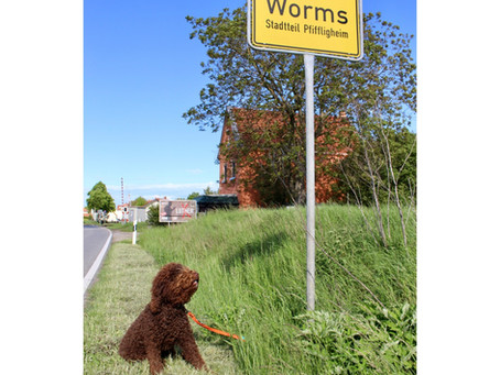 Wiedersehen in Worms