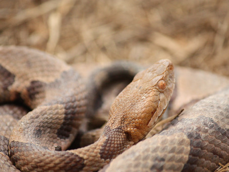 Snake Season! A few considerations for the dog park
