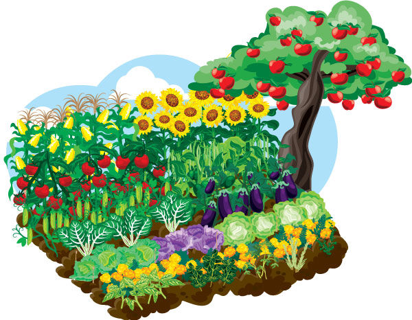 GARDEN_background_no_veggies_600.jpg