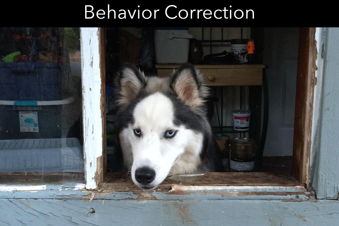 Behavior Correction