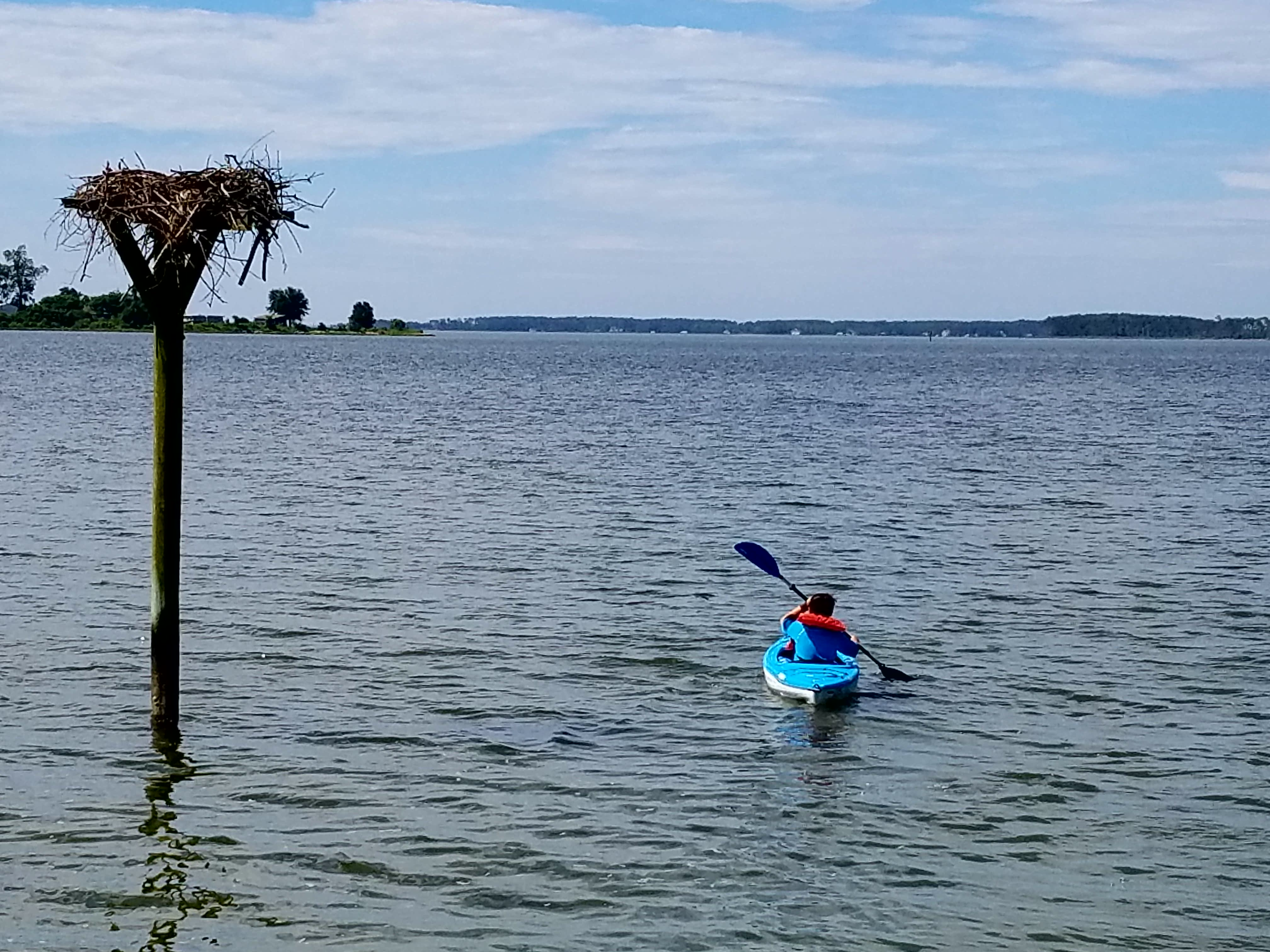 Environmental Advocacy_Researching Chesapeake Bay Habitat1_ 2016 Summer