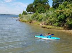 Environmental Advocacy_Researching Chesapeake Bay Habitat_ 2016 Summer. jpg