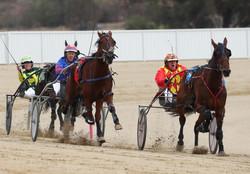 Wagga Harness Racing Club Meetings