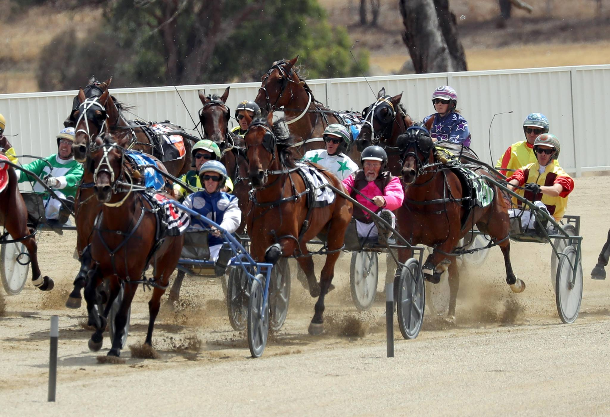 Wagga Harness Racing Club