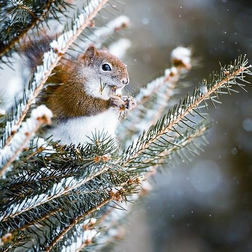 Wild at Heart - Children's Christmas Retreat