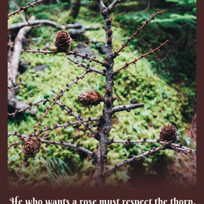 尋獲生命中的玫瑰