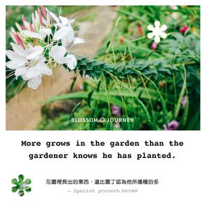 栽種自己的心田