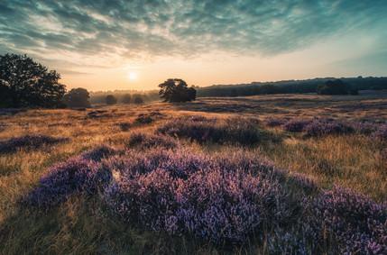 Sonnenaufgang in der Westruper Heide