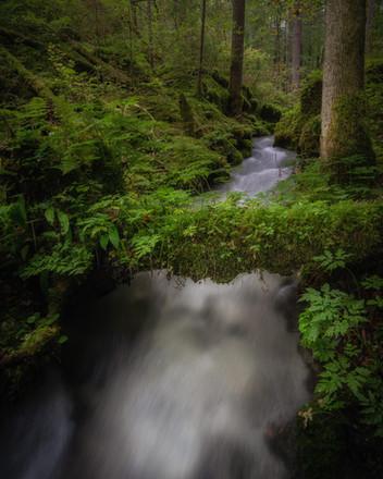 Bachlauf im Zauberwald
