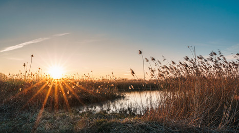 Sonnenuntergang in den Rieselfeldern