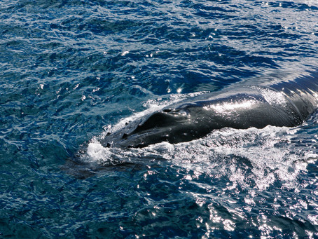 Whale Watching and Watercolour Workshop