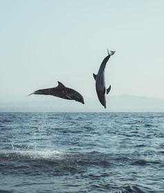 Dolphins in Oaxaca.