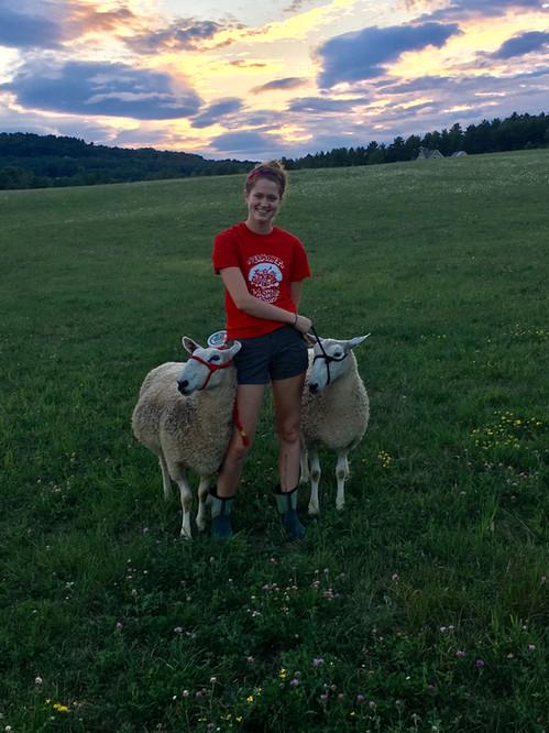 lark sheep .jpg