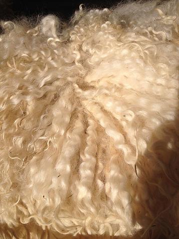 fleece .jpg