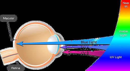 überanstrengung der augen unsere augen sind nicht für die belichtung mit künstlichem blauen licht ausgelegt, welches von digitalen geräten abgegeben wird. dieses kurzwellige, hochenergetische blaue licht dringt dabei bis in die netzhaut ein. übermäßige belichtung mit diesem licht kann nachhaltige auswirkungen auf unsere augengesundheit haben, welche zu nebenwirkungen führt, wie: trockene augen augenmüdigkeit verschwommene sicht hals- und rückenschmerzen, kopfschmerzen die kommulative wirklung kann zu schäden an der netzhaut führen
