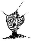 FishBirdsTrio.jpg