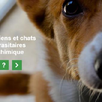 Protéger ses chiens et chats avec des antiparasitaires sans pesticide chimique