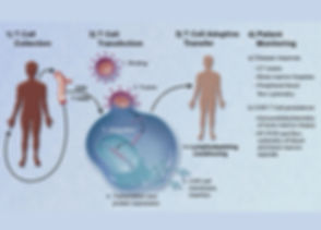 1200px-CAR-Engineered_T-Cell_Adoptive_Tr
