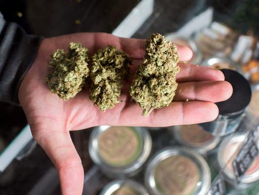Marihuana (kanabis) i rak – ima li neka veza i mogu li se legalno liječiti i u Hrvatskoj?