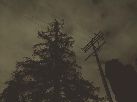 Moody LA Tree