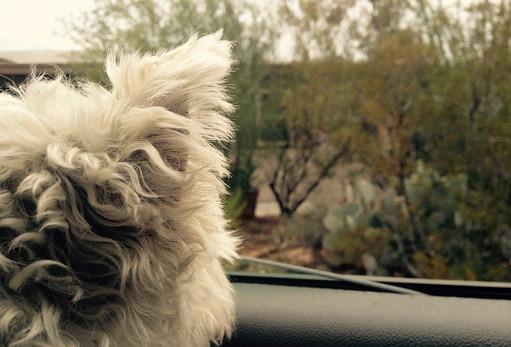 My Dog Max