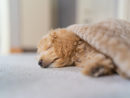 3 Tips for a Better Night's Sleep