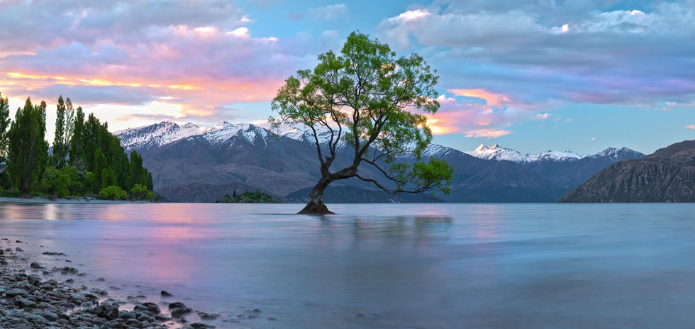 122x62_cm_wanaka_tree,_nz_0m4a2527_panor