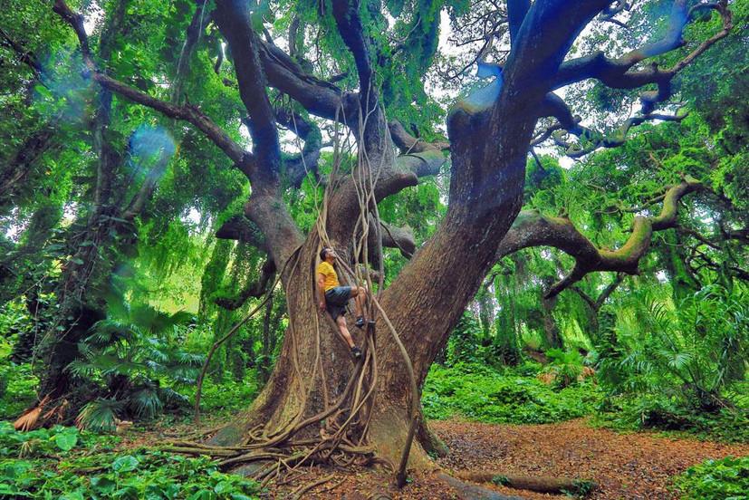 Honolua Forest, Maui, Hawaii 2016