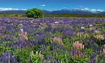 61x101_fiordland_a__1233698_20130922_110