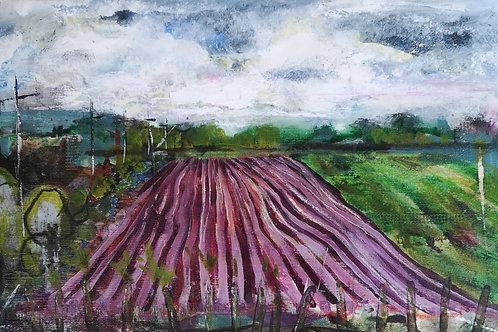 Goose Lane Potato Field