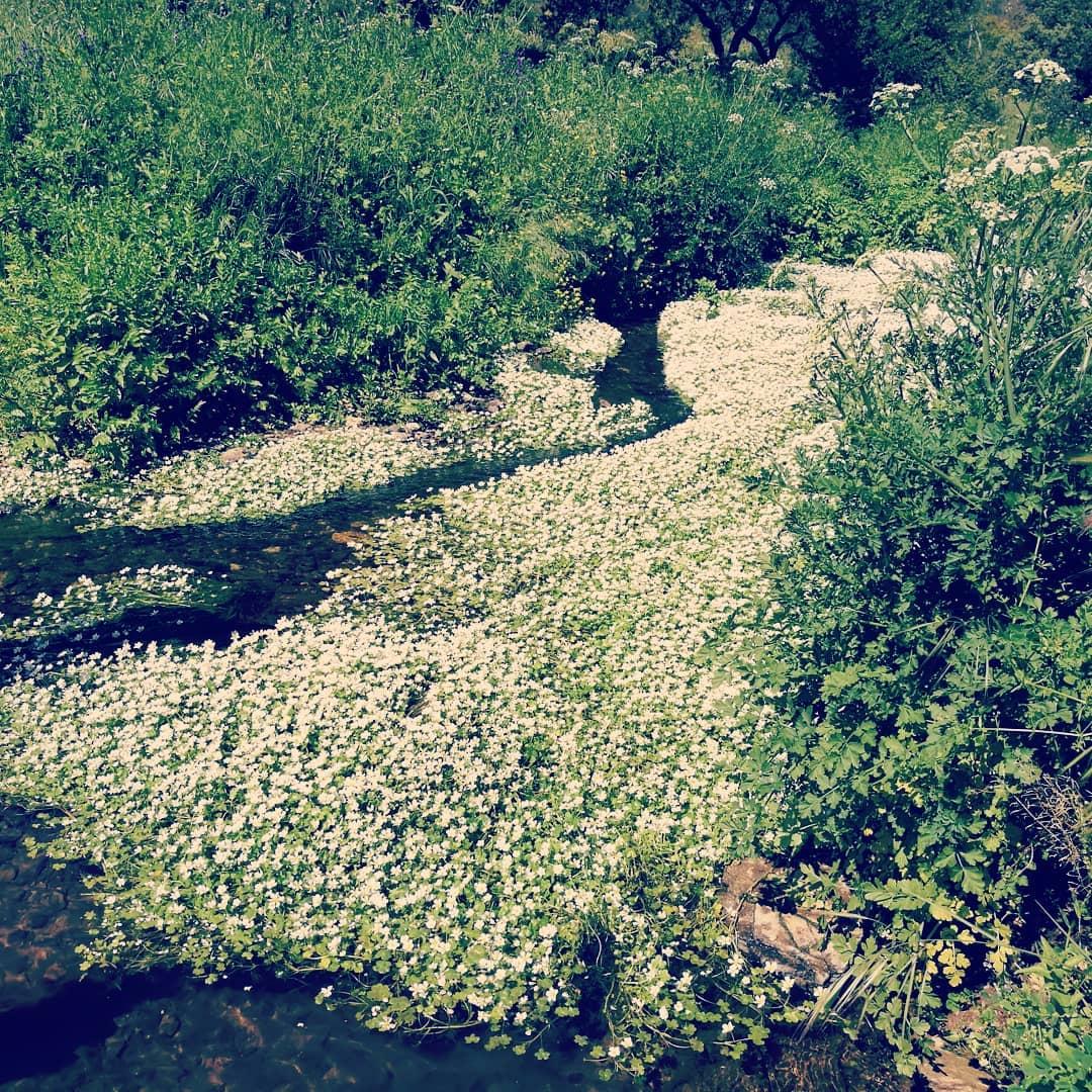 Rio Torto Coberto de Flores