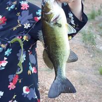 Pesca desportiva do achigan