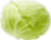 vege_cabbage_main_visual[1].png