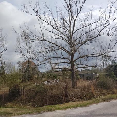 Bush Hog and Debris Cleanup