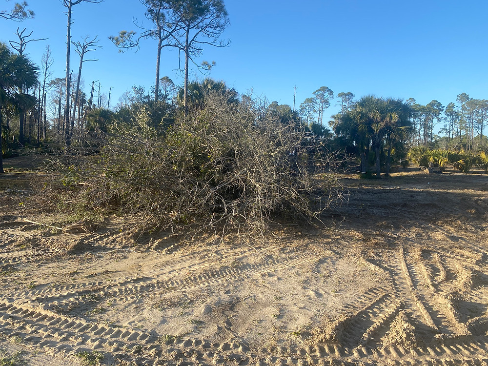 Land clearing lot cleanup port st joe