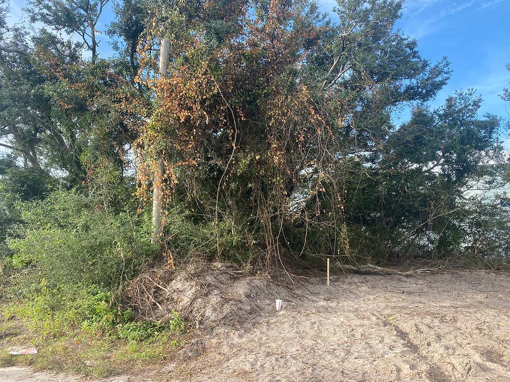 Beacon Hill Lighthouse Site Prep.