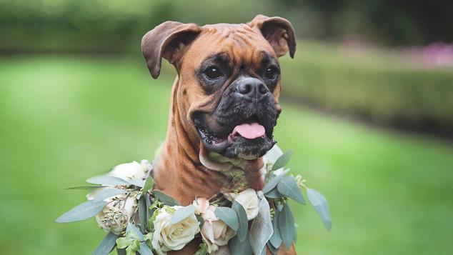 dog-floral-wreath-wedding.jpg