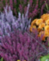 Herbstflor_bunt_Pippert.jpg