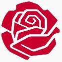 rose hvid baggrund.png