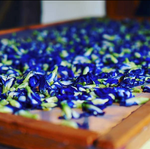 blue tea flowers drying.png