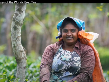 Impact Tea releases a wonderful video about AMBA & Forest Hill Teas