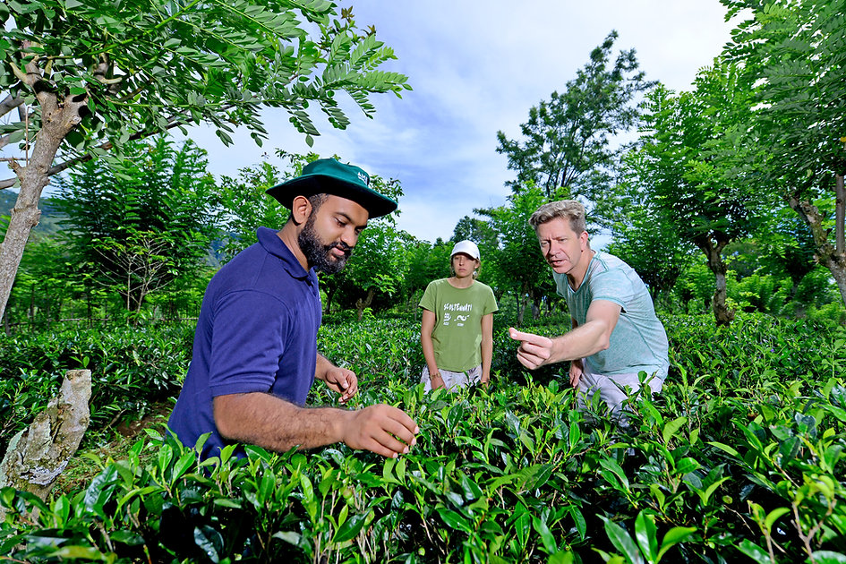 Private Tea tour.JPG