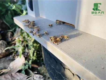 【實習生的農場探索|巡田水日常:虎頭蜂竟然吃蜜蜂?】