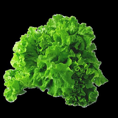 嘉義縣中埔鄉無毒水耕蔬菜:綠捲萵苣 Green iceberg