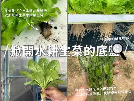 【#食農調查員|掀開水耕生菜的底牌:保留了根部,新鮮的像是從農場剛收成一樣!收到後怎麼保存比較好?】#蔬菜保鮮