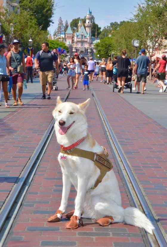 Dog Mocs 2.jpg