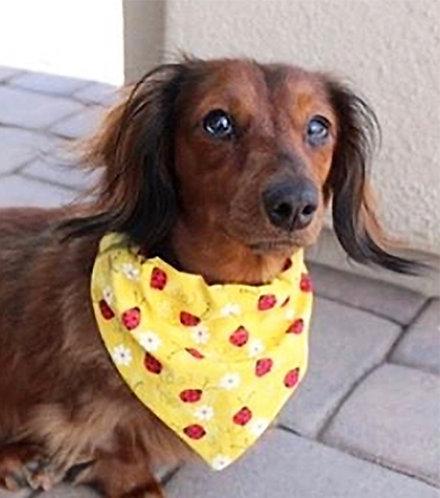 Ladybugs & Daisies Dog Bandana