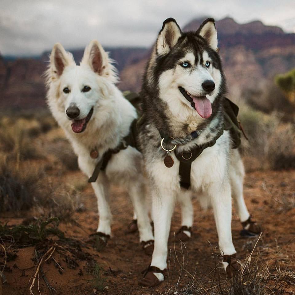 Dog Mocs 1.jpg