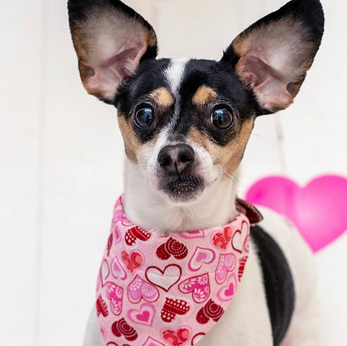 Pink Hearts Valentines Dog Bandana