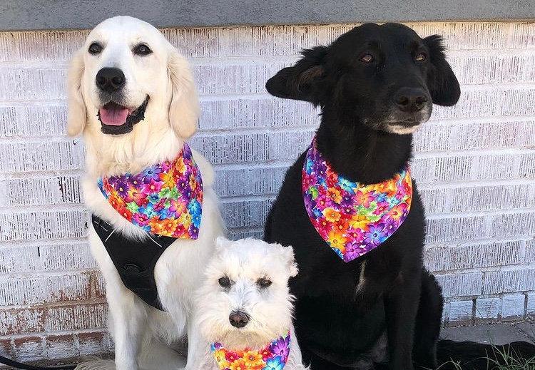 Bright Flowers Over The Collar Dog Banda